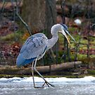 Heron on Ice by angelcher