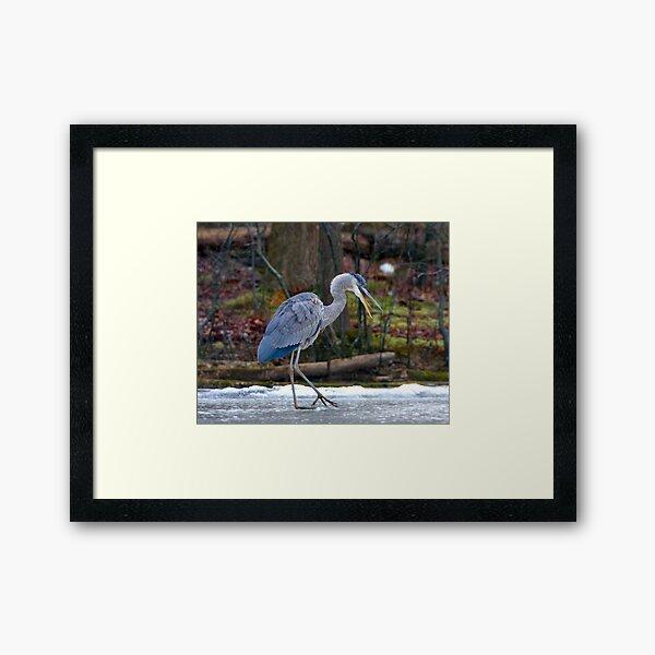 Heron on Ice Framed Art Print