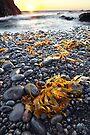 Cape Schank, Mornington Peninsula, Australia by Michael Boniwell