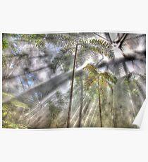 Light Streaming Rainforest Dreaming Poster