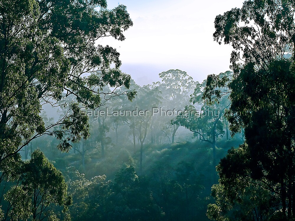 Daylight seeping through the trees by GayeLaunder Photography