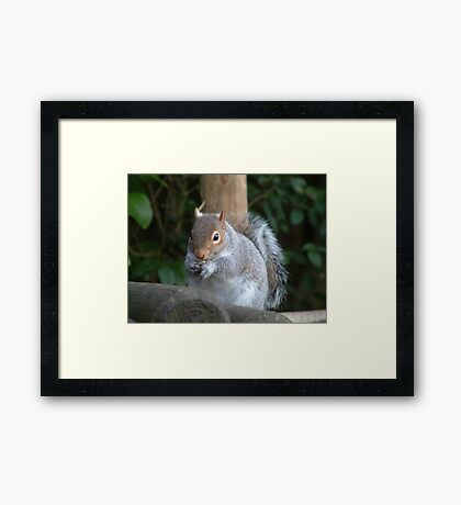 Thanks for the Nuts. Framed Print