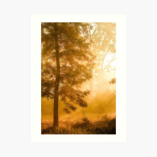 Mist & Tree Art Print