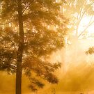Mist & Tree by bnilesh