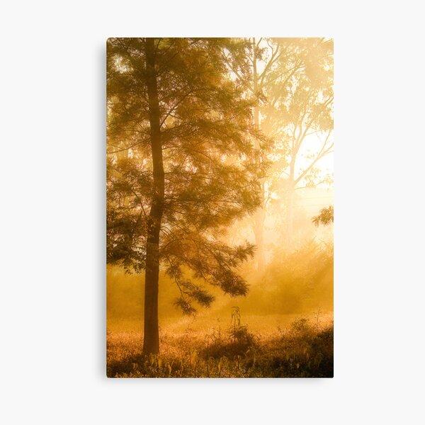 Mist & Tree Canvas Print