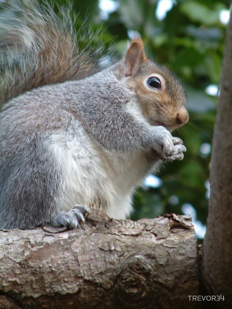 Squirrels Ahoy! by TREVOR34