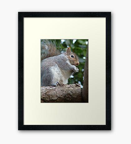 Squirrels Ahoy! Framed Print