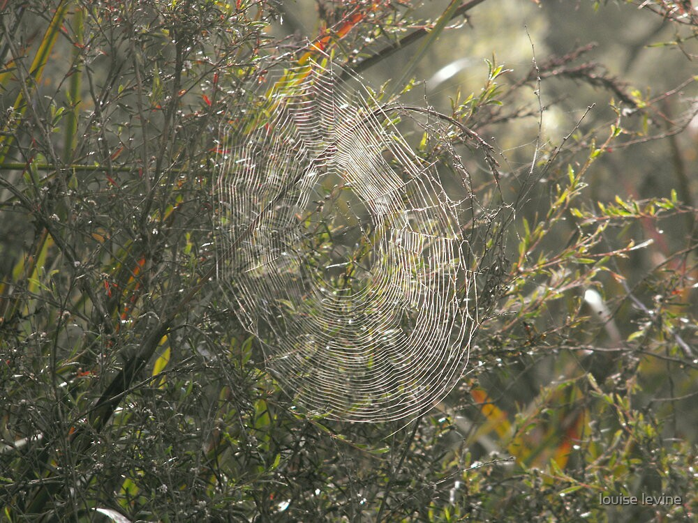 Early Morning Designer Web by louise levine