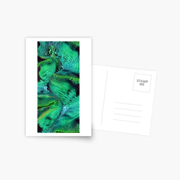 Maxima Green Postcard
