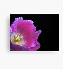 Lovely Tulip. Canvas Print