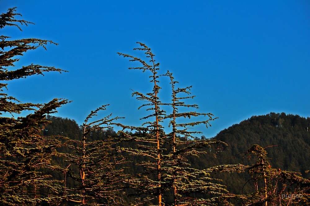 Plants under the Blue Sky by pranab
