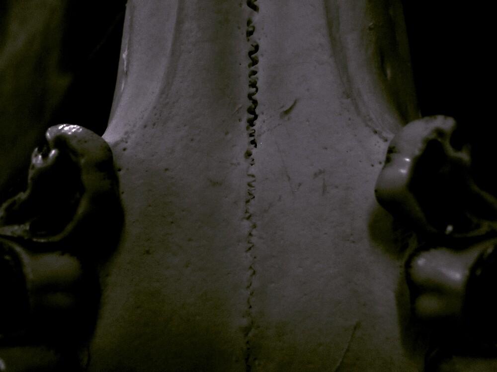 Skull Detail of Animal Taken in Hunt by greycat