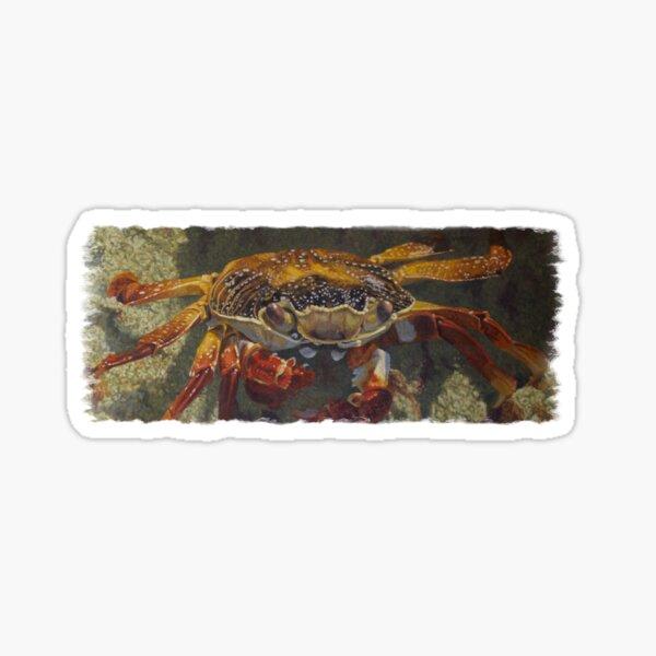 Up Close, Sally Lightfoot Crab Sticker
