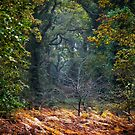 Light in the forest by Geoff Carpenter