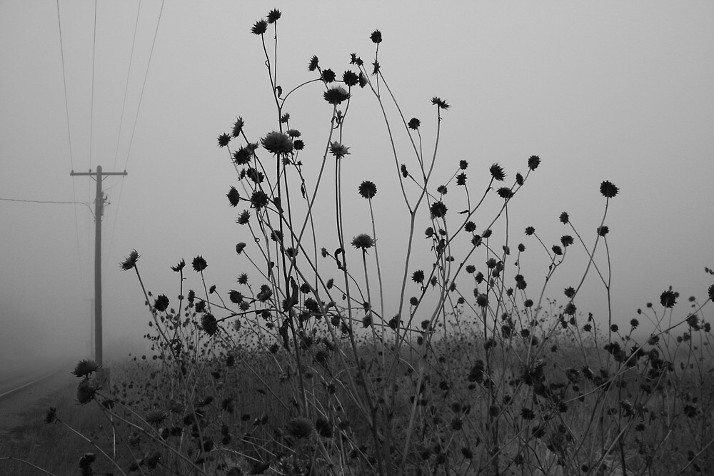 Flowers and Fog  by Sharon Hagler