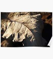 Leaf in Puddle Poster
