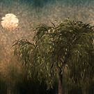 Willow at Sunset by Looly Elzayat