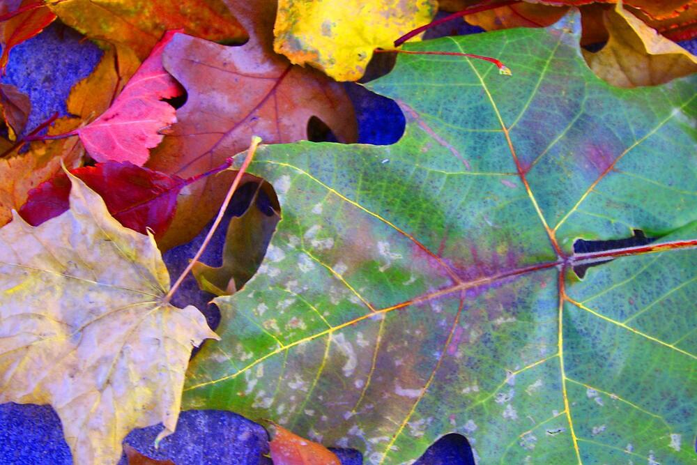 Colors of Brightness ! by Sharon Hagler