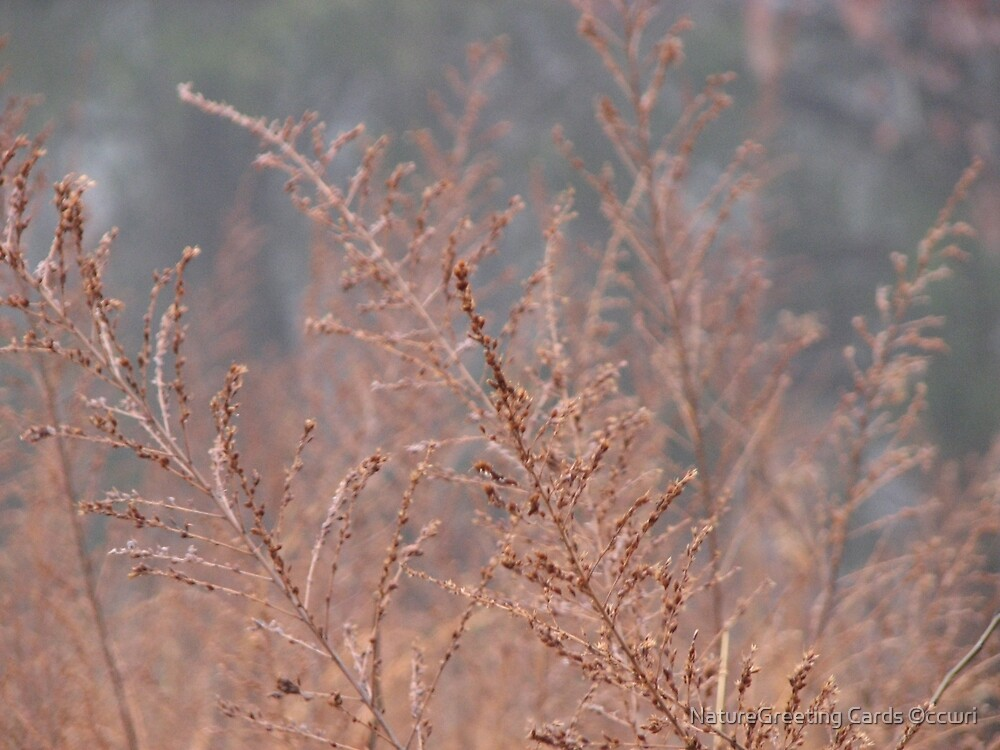 A Little Soft Color On A Grey Winters Day by NatureGreeting Cards ©ccwri