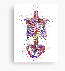 Skeleton torso, watercolor skeleton torso, torso Metal Print