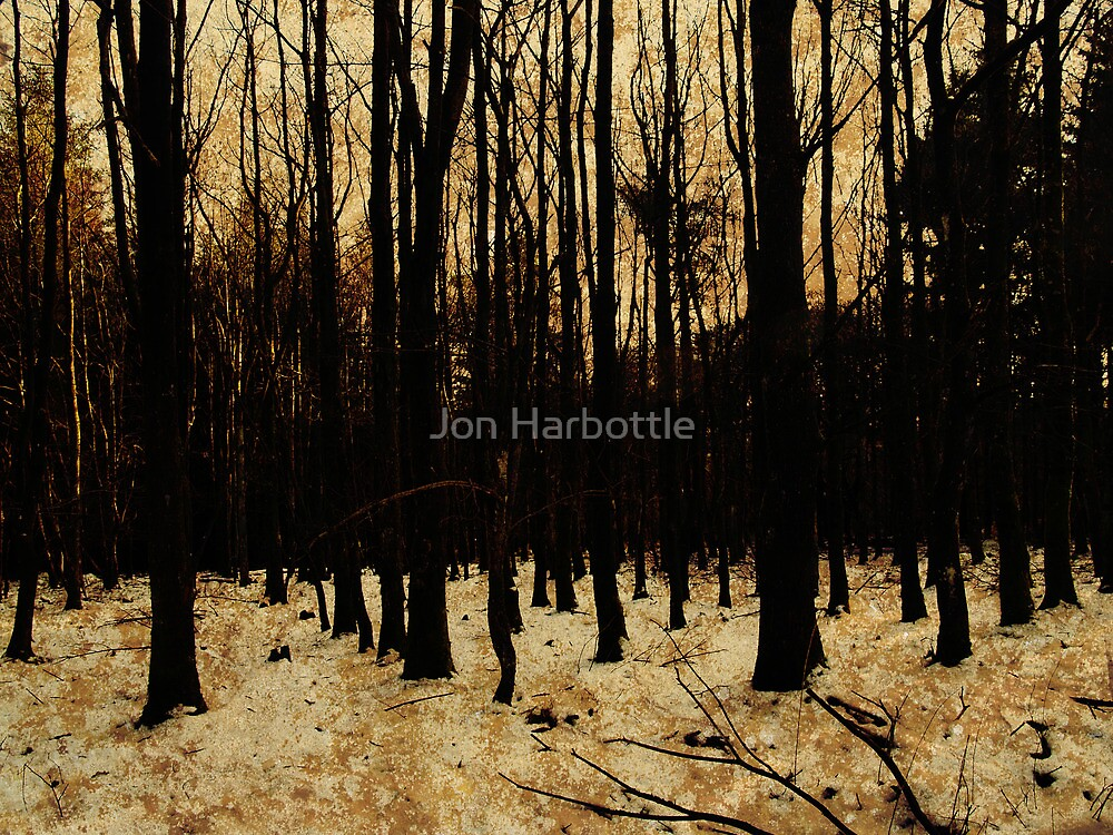 wood and snow by Jon Harbottle
