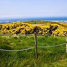Arthur's Seat - Edinburgh, Scotland by rjhphoto