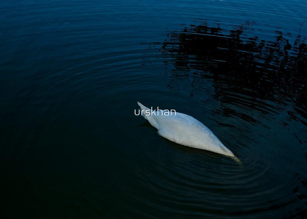 Swan by urskhan