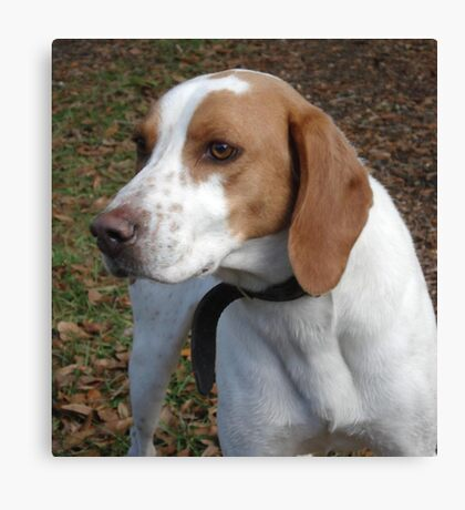 I think his name is 'Red'. Canvas Print