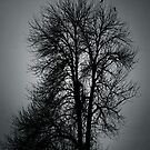 Crow Tree by urskhan
