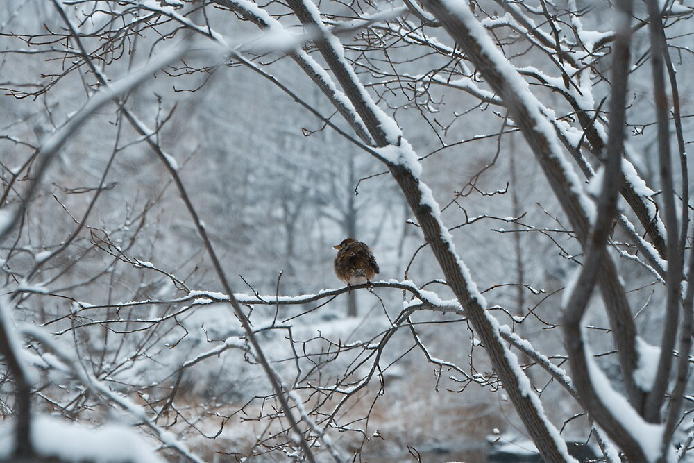 Shelter Me--Snow Storm in Central Park by Dave Bledsoe