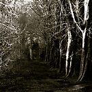 Winter pathway by Richard Pitman