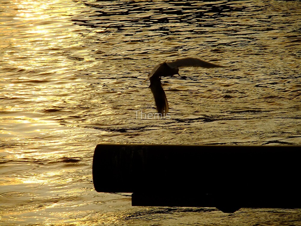 Liquid Gold (The Thames at sunset) by Themis
