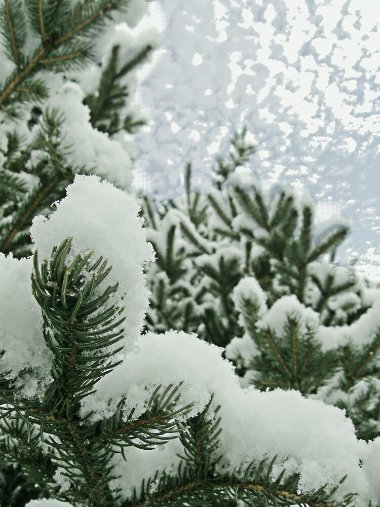 Evergreen Snow by L J Fraser