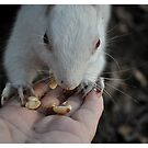 Just nuts about you.. by Karen01