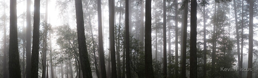 Muir Woods-Marin County, CA by Kevin Fiscus