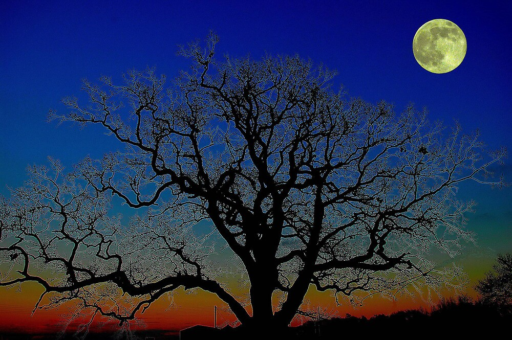 The full moon and a silhouetted tree by Stephen Walton