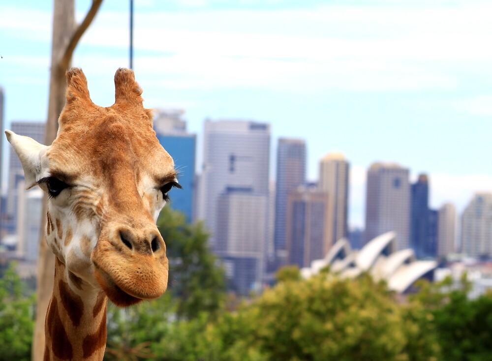 Giraffe in the city by aussiebob