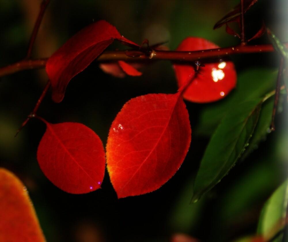 Red Leaves by Linda Yates
