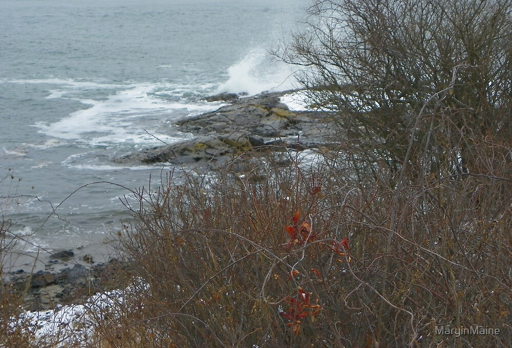 Brambles by the Sea by MaryinMaine