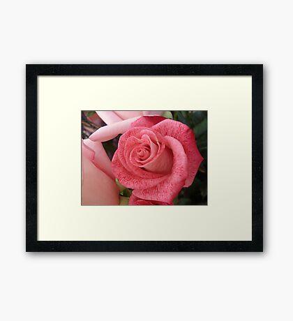 Speckled Rose Framed Print