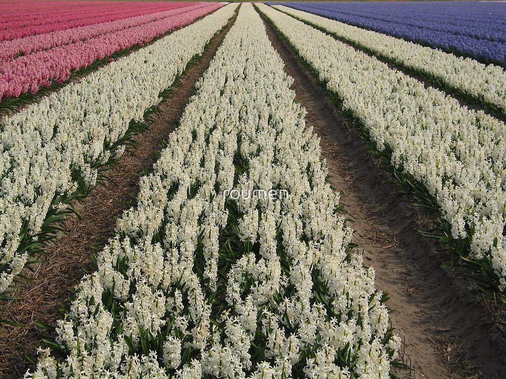 Hyacinth by roumen