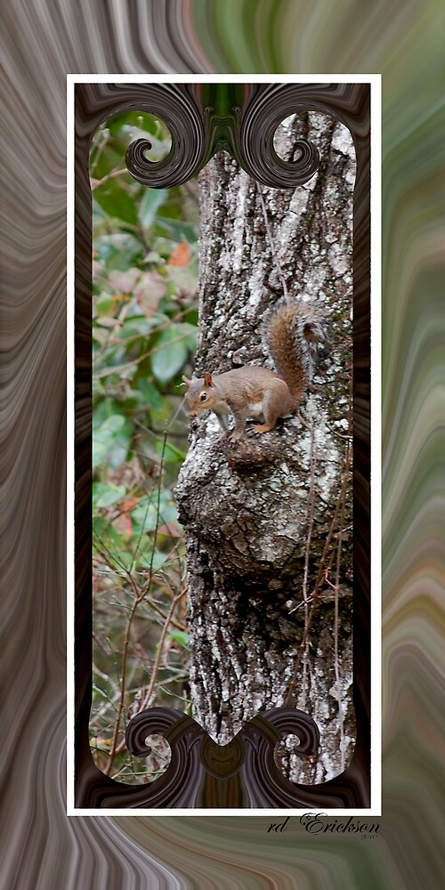 Gray Squirrel - Cat Squirrel by rd Erickson