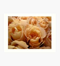 Apricot roses Art Print