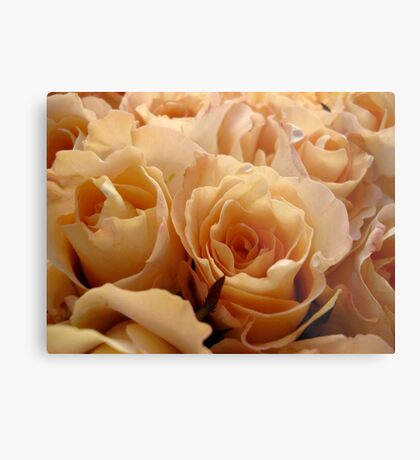 Apricot roses Metal Print