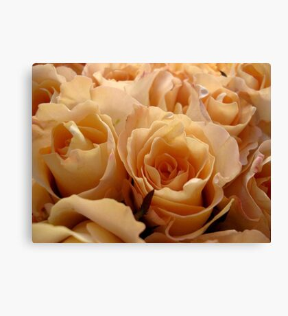 Apricot roses Canvas Print