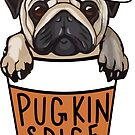 Pugkin Spice Latte by Shayli Kipnis