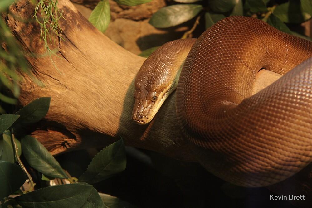 Bronze Python by Kevin Brett