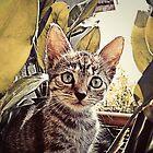 Mouser. by John Medbury (LAZY J)