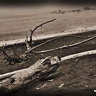 Driftwood by NancyC