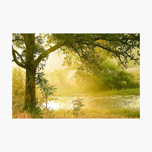 A Misty Morning Photographic Print